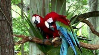 3 HOURS 🐦Beautiful Tropical Birds Playing & Chirping in Aviary -Video Screensaver HD 1080P