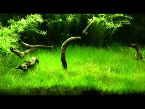 Planted Aquarium HQ