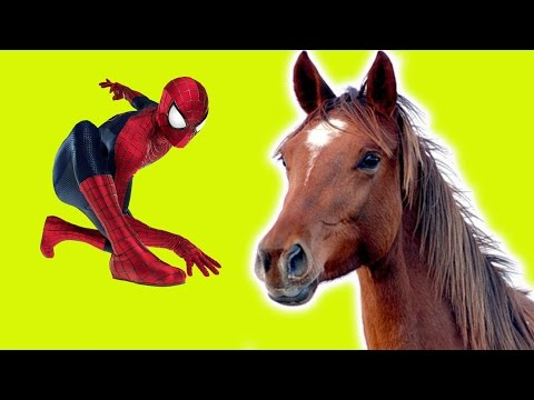 SPIDER MAN ON A HORSE
