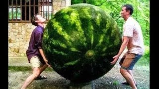 Amazing Fruits and vegetable  largest in the world | Top 42 Amazing