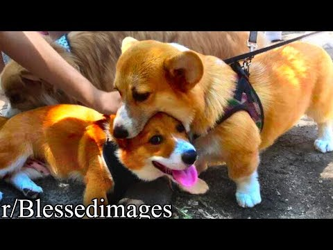 r/Blessedimages | DOG EAT DOG