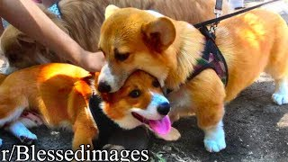 Download r/Blessedimages | DOG EAT DOG Mp3 and Videos