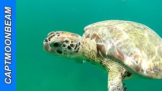 Barbados, Swimming With the sea Turtles, Carnival Liberty Cruise