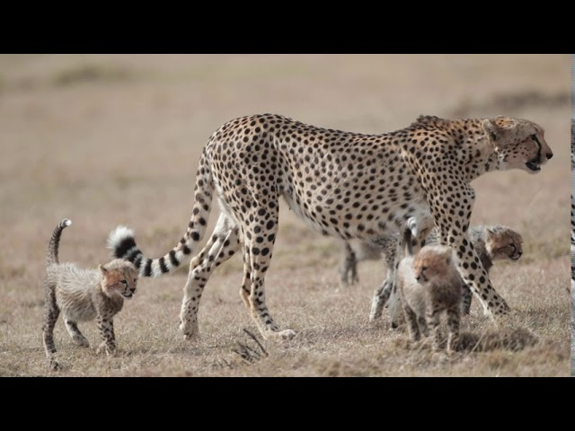 CHEETAH-CUB MOMENTS