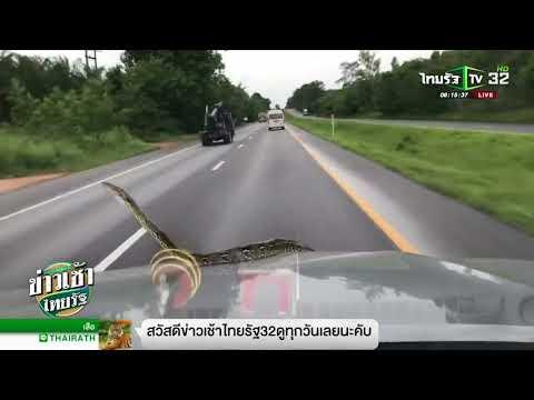 'รถที่มีงูออกมา'ชาวเน็ตหาแต่เลขทะเบียน | 16-08-61 | ข่าวเช้าไทยรัฐ
