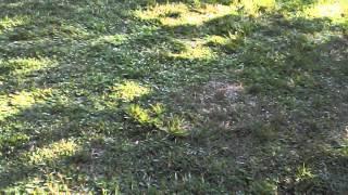 Ukrainian Easter Celebration at Bay Area, CA , 2015.  Drone Video VI thumbnail