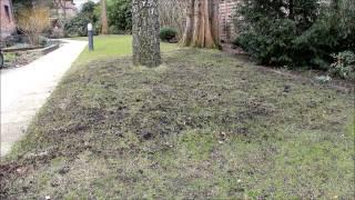 Den Rasen reparieren - NewWonder555