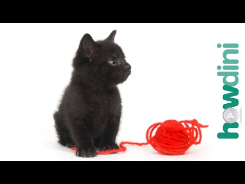 How To Train A Kitten To Play Gently - Cat Training Tips