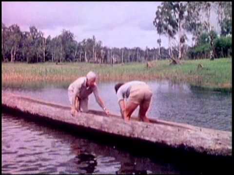 Crocodiles of Papua New Guinea
