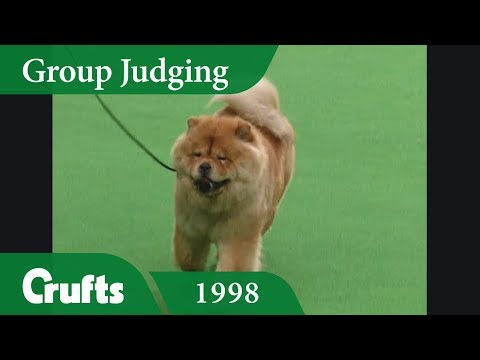 Chow Chow wins Crufts 1998 Utility Group Judging