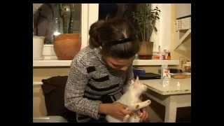 Микроспория(Как бороться с микроспорией? Правда ли, что единственный выход - это усыпить животное? Чем же так опасен лишай?, 2012-04-15T11:41:49.000Z)