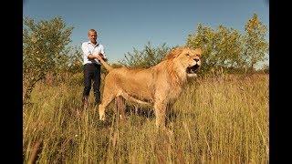 О том , как меняется НАСТРОЕНИЕ  ЛЬВА How the lion