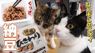 はじめて納豆を見た猫、予想外の爆食い