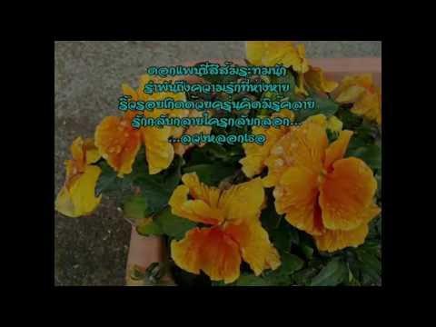 กลอนดอกไม้ by Nid Nid