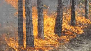 видео Обзор изменений в законодательстве об охране окружающей среде