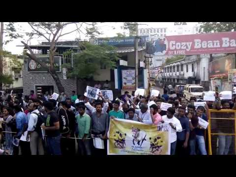 Ban PETA & Support to Jallikattu by IT Employees in DLF, Manapakkam, Chennai