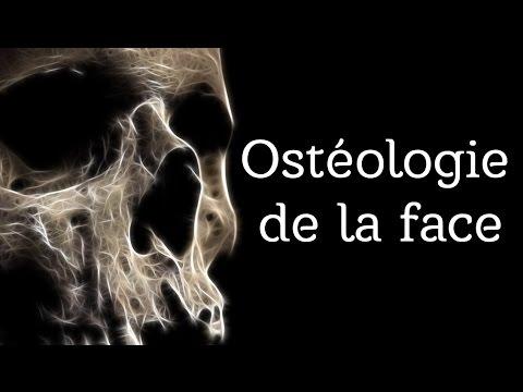 Anatomie - Osteologie de la face