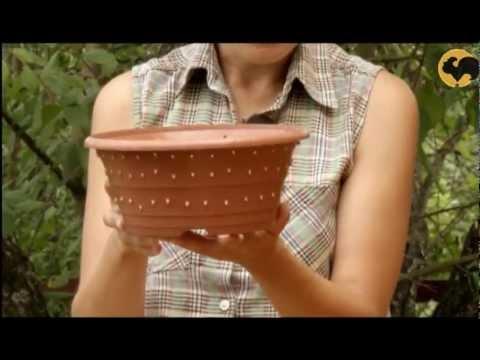 видео: Садовый водоём. САД день за днем №9.