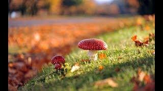 Природоведение. Сообщество грибное