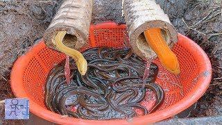 Dùng Cái Rỗ Nhựa VỚi Ống Tre Để Bẫy Lươn Đồng & Cái Kết Quá Bất Ngờ .Amazing Eel Trap
