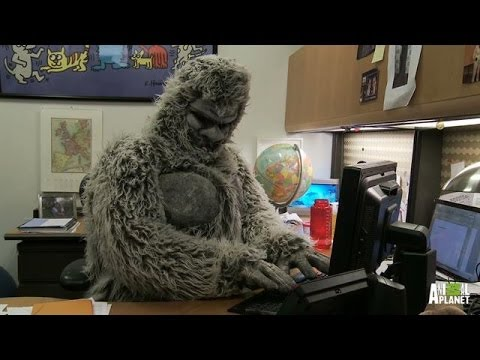 Best Bigfootage: Curious Creature Caught On Cop Car Dash Cam | Finding Bigfoot