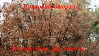 Немного поэзии. Осень и поэт А. Ахматова. A little bit of poetry. Autumn and the poet A. Akhmatova.
