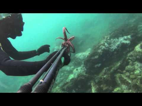 La chasse sous marine EDEN ORAN (HABIBOU)
