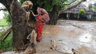 This woman eager to serve these speechless animals who really need humans help