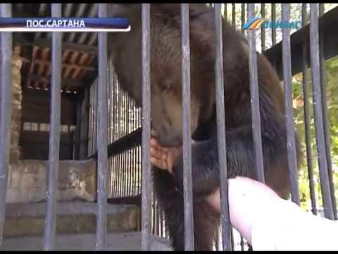 ТК Донбасс - Именины медвежонка из Сартаны