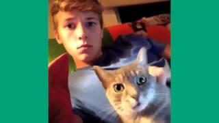 Сборник приколов с котами (2015)