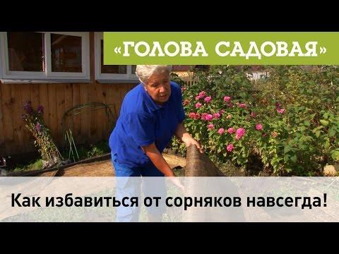 Bildergebnis für как избавиться от сорняков навсегда