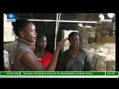 Chido Govera Teaches Young Zimbabwean Women The Art Of Mushroom Farming |Eco@Africa|