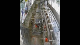 31 no sale done_Red Sea Dairy Farm_cow farm in Feni Bangladesh
