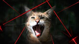 BIG CATS vs Laser Pointers!