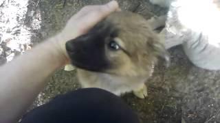 Сладкие собаки