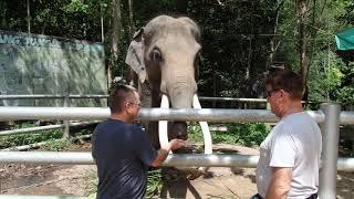 An Elephant Feeding Peter Vial and Rodney Hemmings
