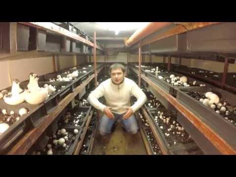 выращивание грибов в томилино