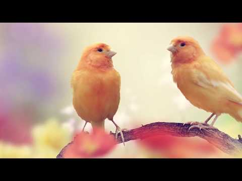 "Peaceful music, Relaxing music, Instrumental music, ""Meadow Songbirds"" by Tim Janis"