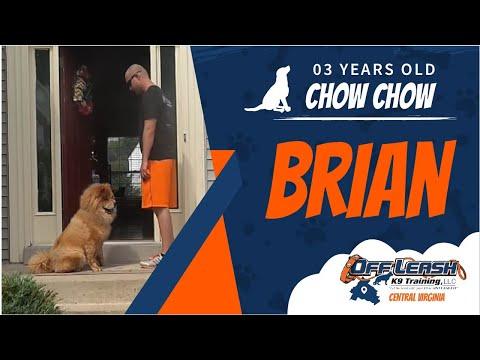3 y/o Chow Chow (Brian) | Best Dog Trainers In Richmond | Richmond Virginia Dog Training