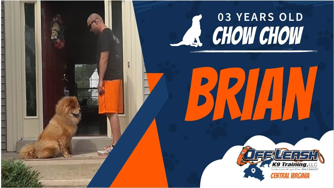 3 Y O Chow Chow Brian Best Dog Trainers In Richmond