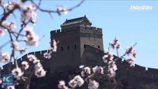 Baixar Traditional Mongolian group wedding held on China's Great Wall