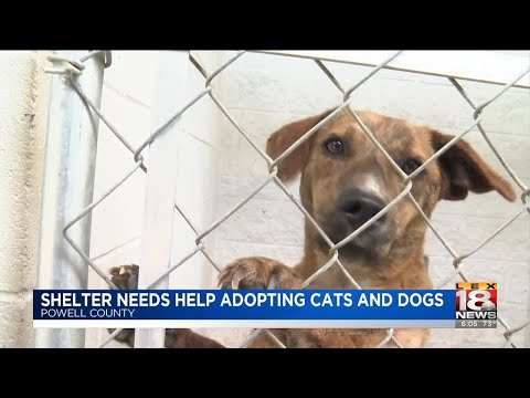 Shelter Needs Help Adopting Cats And Dogs