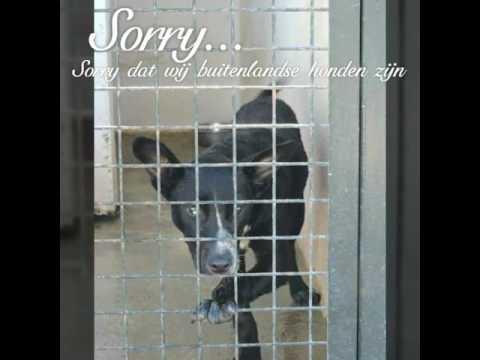 Sluit je ogen niet Hada Nederland adoptie
