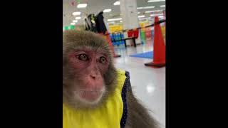 Hayvanlar Alemi #04 - Maymunlar - (Derleme Maymun Videoları)