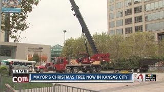Mayor's Christmas Tree delivered to Kansas City