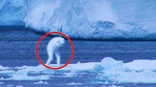 TOP 5 - Tajemná stvoření zachycená na kameru!
