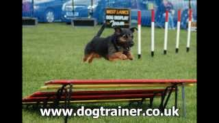 Puppy Training Classes Liverpool, Dog Training Classes Liverpool, Www.dogtrainer.co.uk