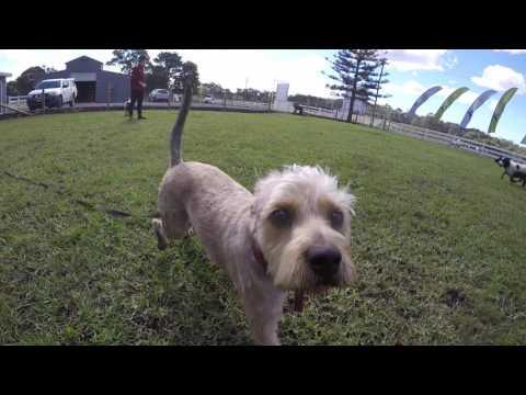 Paradise Pet Parks Australia