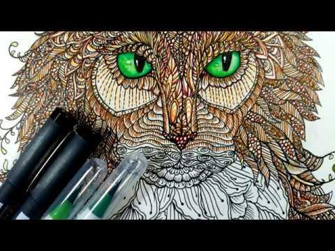 Zentagle Time Lapse - Norwegian Forest Cat