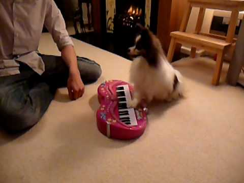 papillon-learning-the-keyboard-lesson-6